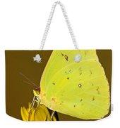 Orange Barred Sulfur Butterfly Weekender Tote Bag