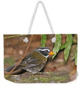 Orange-billed Sparrow Weekender Tote Bag