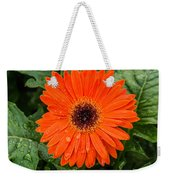 Orange Gerber Daisy 3 Weekender Tote Bag