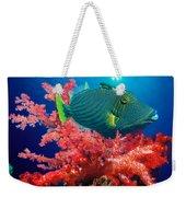 Orange-lined Triggerfish Balistapus Weekender Tote Bag