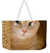 Orange Tabby Cat In Cat Condo Weekender Tote Bag