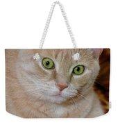 Orange Tabby Cat Poses Royally Weekender Tote Bag