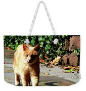 Orange Tabby Taking A Walk Weekender Tote Bag