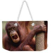 Orangutan Hanging On Tree Weekender Tote Bag