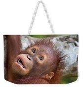 Orphan Baby Orangutan Weekender Tote Bag