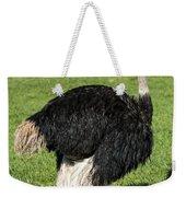 Ostrich 1 Weekender Tote Bag