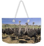 Ostrich Females South Africa Weekender Tote Bag