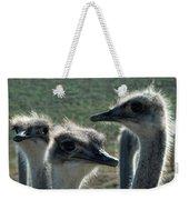 Ostrich Round-up Weekender Tote Bag