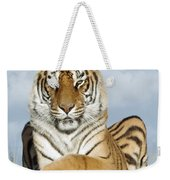 Out Of Africa Tiger 3 Weekender Tote Bag