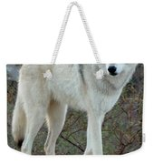 Out Of Africa Wolf  Weekender Tote Bag