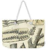 Paleozoic Flora, Calamites, Illustration Weekender Tote Bag