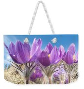 Pasque Flowers Close-up In Natural Environment Weekender Tote Bag
