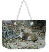 Bobcat Weekender Tote Bag by Mae Wertz