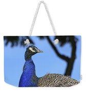 Indian Peacock Portrait Weekender Tote Bag