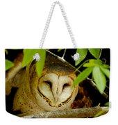 Peering Barn Owl Weekender Tote Bag