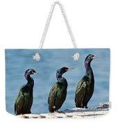 Pelagic Cormorants Weekender Tote Bag