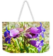 Penstemon On Miles Canyon Trail To Canyon City Near Whitehorse-yk  Weekender Tote Bag