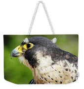 Peregrine Falcon Portable Battery Charger for Sale by ...