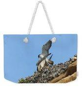 Peregrine Falcons - 5 Weekender Tote Bag