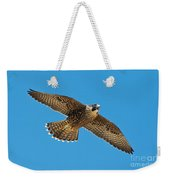 Peregrine Young Screaming For Food Weekender Tote Bag