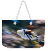Picasso - Lagoon Triggerfish Rhinecanthus Aculeatus Weekender Tote Bag