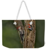 Pilated Woodpecker Family Weekender Tote Bag by Susan Candelario