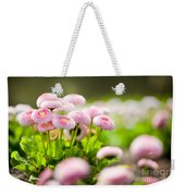 Bellis Perennis Pomponette Called Daisy Blooming  Weekender Tote Bag
