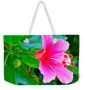 Pink Hibiscus Near Celadon Factory In Chiang Mai-thailand Weekender Tote Bag