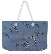 Pintado Petrel Flock Flying Antarctica Weekender Tote Bag