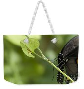 Pipevine Swallowtail Mother With Eggs Weekender Tote Bag
