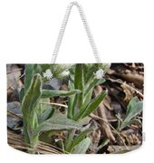 Plantain-leaved Pussytoes Wildflowers - Antennaria Plantaginifolia Weekender Tote Bag