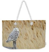 Plum Island Snowy Owl On A Fence Post Weekender Tote Bag