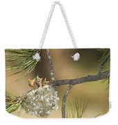 Plumbeous Vireo Begging Arizona Weekender Tote Bag by Tom Vezo