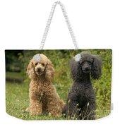 Poodle Dogs Weekender Tote Bag