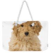 Poodle In Christmas Hat Weekender Tote Bag