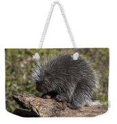 Porcupine Looking For Food Weekender Tote Bag