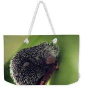 Porcupine Slumber Weekender Tote Bag