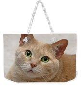 Portrait - Orange Tabby Cat Weekender Tote Bag