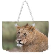 Portrait Of A Lioness, Panthera Leo Weekender Tote Bag
