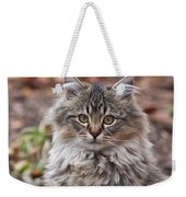 Portrait Of A Maine Coon Kitten Weekender Tote Bag