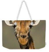 Portrait Of A Rothchilds Giraffe Weekender Tote Bag