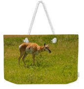 Portrait Of A Young Pronghorn Weekender Tote Bag