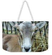 Portrait Of Mouflon Ewe Weekender Tote Bag