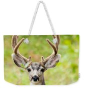 Portrait Of Mule Deer Buck With Velvet Antler  Weekender Tote Bag