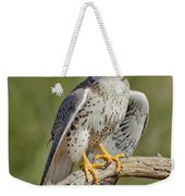 Praire Falcon On Dead Branch Weekender Tote Bag