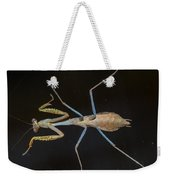 Praying Mantis 4 Weekender Tote Bag
