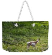 Pronghorn Antelope Among Wildflowers Weekender Tote Bag