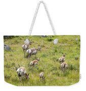 Pronghorn Antelope In Lamar Valley Weekender Tote Bag