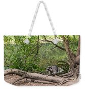 Raccoon At The Lake Weekender Tote Bag