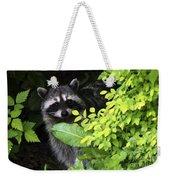 Raccoon Peek-a-boo Weekender Tote Bag
